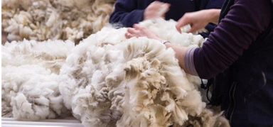Wool being processed into yarn for carpet fiber
