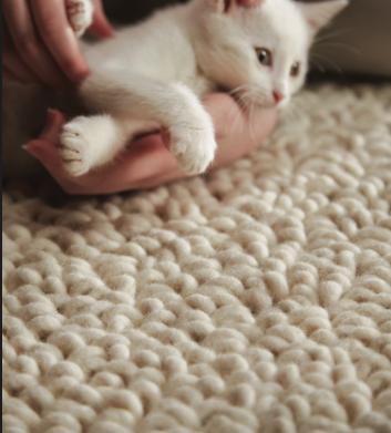 Kitten cuddles on beige wool carpet, berber loop pile